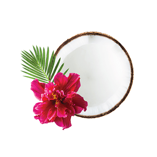 coconut and hibiscus